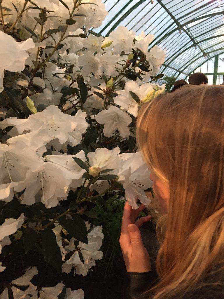 Flowers Royal Garden Laeken